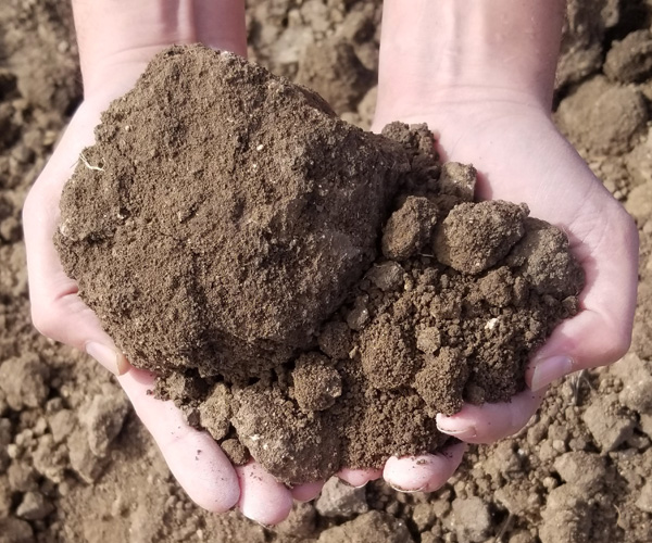 top-soil-unscreened